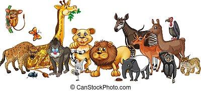 Different wild animals on white background