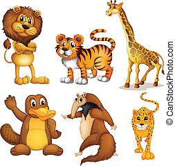 differente, generi, di, terra, animali