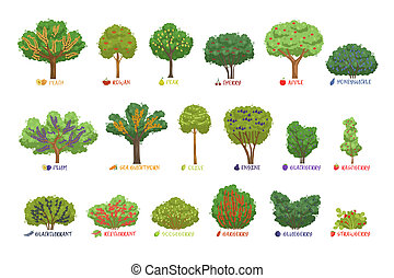 Cespugli differente bacca giardino set albero frutta for Cespugli giardino