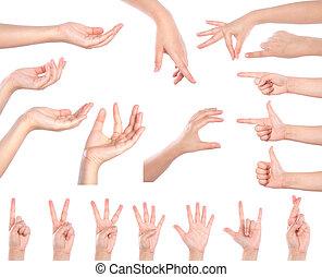 differente, set, molti, sopra, isolato, fondo, mani, bianco