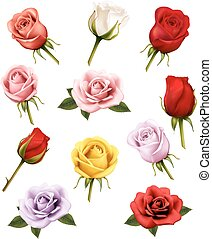 differente, set, roses., vector.