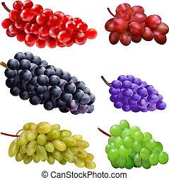 differente, set, varietà, uva