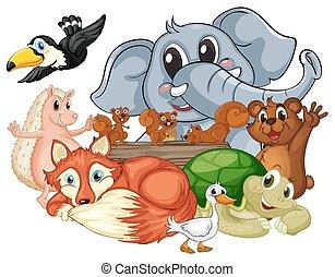 differente, tipo, di, animali