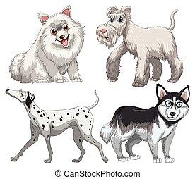 differente, tipo, di, canino