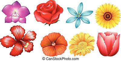 differente, tipo, di, fiori