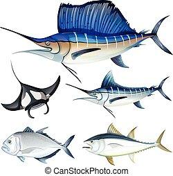differente, tipo, di, fish