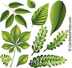 differente, tipo, di, foglie
