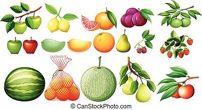 differente, tipo, di, frutte