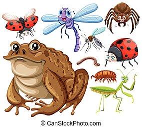differente, tipo, di, insetti