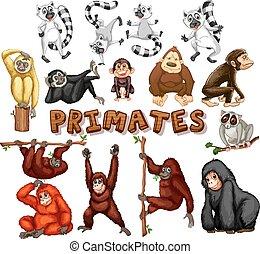differente, tipo, di, primati