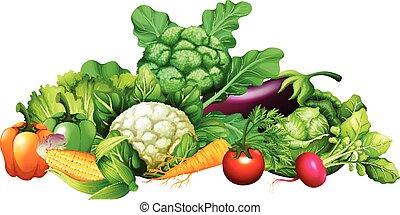 differente, tipo, di, verdura