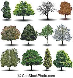 differente, vettore, albero