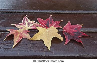 differents, érable, parc, texture., mensonge, feuilles, couleur, banc, parc, automne