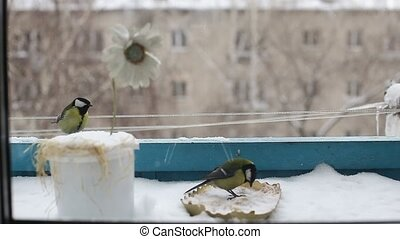 bird, nature, nature, small, snow, titmouse, city, house, balcony, wildlife, winter, animal, background, branch, closeup, color, european, feather, feeder, fly, great, hunger, little, look, major, nutrition, nuts, ornithology, paridae, parus, passeriformes, perch, plumage, seeds, slow, thick, tiny, ...