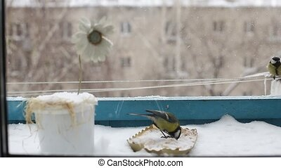 difficult time for birds and waiting for spring - bird,...