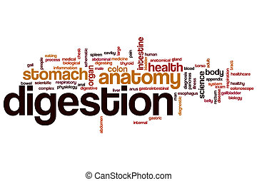 Digestion word cloud concept