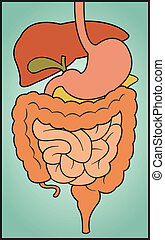 A colorful, cartoon depiction of the human digestive system.