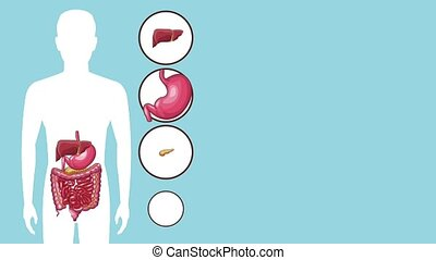 Digestive system concept HD animation