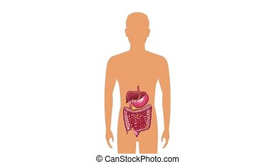 Digestive system concept HD animation - Digestive system on...