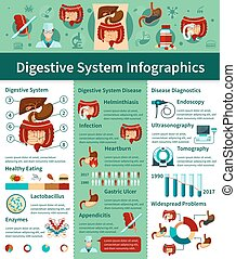 Digestive System Flat Infographics - Colored digestive...