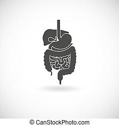 Digestive System Illustration - Digestive system with liver...