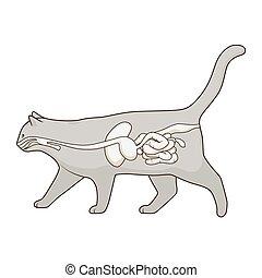 cat digestive system