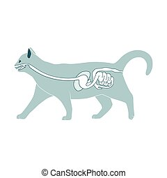 Digestive system of the cat vector illustration - Digestive...
