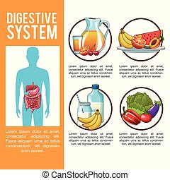 Digestive system poster - Digestive system infographic with ...