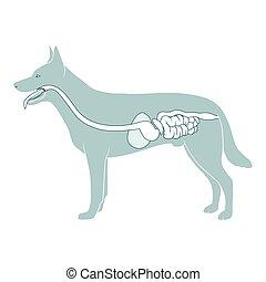 digestivo, vetorial, sistema, ilustração, cão