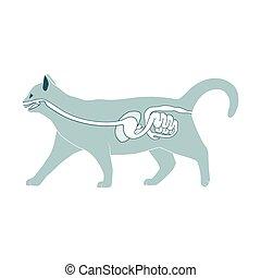 digestivo, vetorial, sistema, ilustração, gato