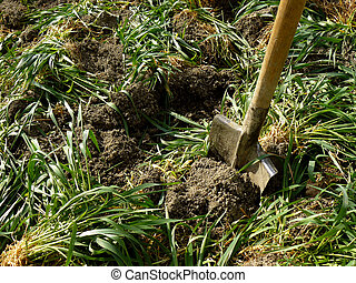 green manure - digging of green manure into the soil for...