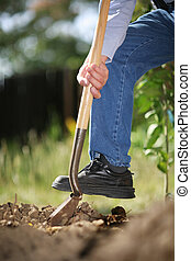 Digging soil - Man digging spring soil with shovel. Close-up...