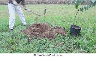 digging - man working on landscape improvement, planting...