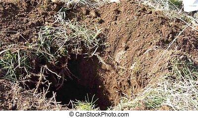 digging - man working in the garden