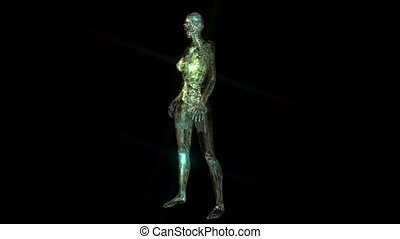 Digital 3D Animation of the human Anatomy