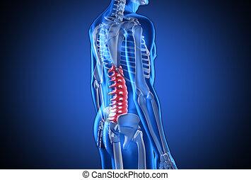 digital, azul, humano, con, destacado, espina dorsal