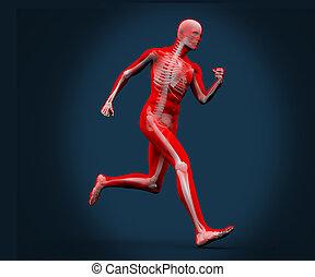 Digital body running on a blue background