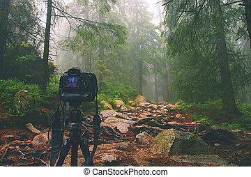 Digital camera on tripod in forest.