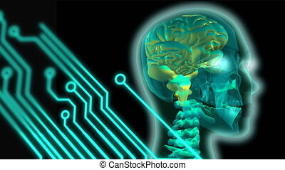 Digital circuit and a brain inside the skull