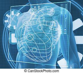 digital, diagrama, azul, corazón, cuerpo