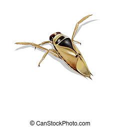 common backswimmer - Digital illustration of a common ...