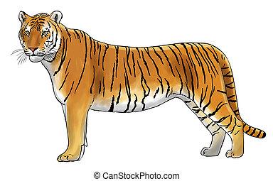 tiger - Digital illustration of a tiger, inked