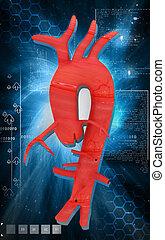 Aorta - Digital illustration of Aorta in colour background