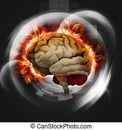 Digital illustration of human brain