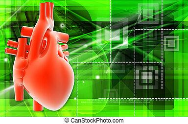 human heart - Digital illustration of human heart in colour...