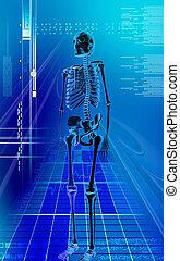 human skeleton - Digital illustration of human skeleton in ...