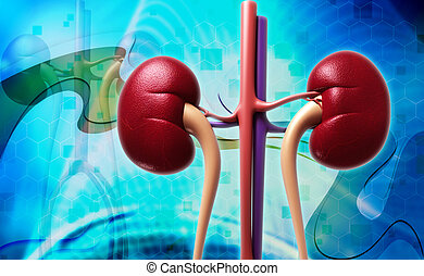 Digital illustration of kidney in colour background