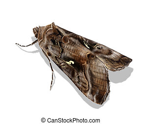 Silver Y - Digital illustration of the nocturnal moth Silver...