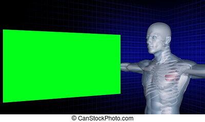 Digital man rotates