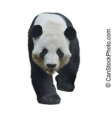 Giant Panda Bear - Digital Painting of Giant Panda Bear...